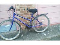 mountfield ladies cycle 26 ins wheels 16 gears tyres unworn jell seat cycle is almost as good as new