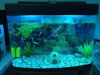 64 litre FishBox Fish tank with Stand, 2 Lights, Gravel, Filter and Heater.