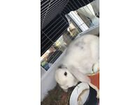 Rabbit for sale!