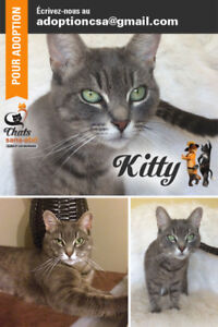 KITTY - Femelle