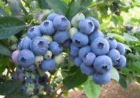 Blueberries  Upick  Bleuets   String  Beans Upick Haricots