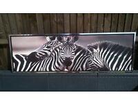 Lovely Zebra Canvas