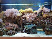 4ft marine aquarium setup for sale