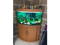 2 x 190l Juwel corner fish tank both full set up with stand 2 t5 light Juwel filter heater more