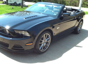 2014 Ford Mustang GT PREMIUM 5.0 LT Convertible BLACK ON BLACK