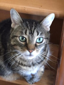 Lost Cat - Meaford