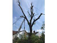 Tree cutting tree removal tree surgeon