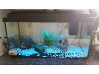 Gold fish and tank