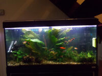 Fluval 200L fish tank and accesories