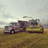 Silage truck drivers needed