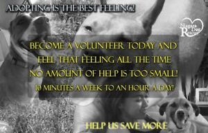 Can you help us find a dog a home..Volunteer niagara dog rescue