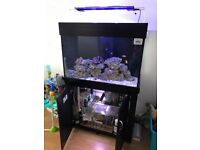 Aqua one 300 litre marine tank