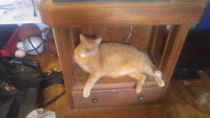 cat need gone 2 years old he is spayded