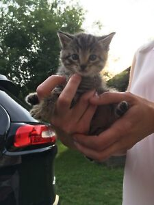 Kitten in need of a forever home
