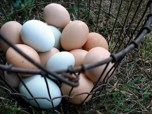 Fresh Free range eggs