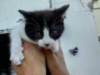 Kitten & and mum urgent need to be re home . free to a good home