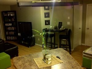 Two Bedroom Two Bathroom Condo for rent Aug 1