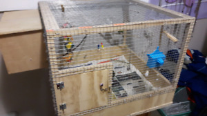 Mated pair budgies with homemade cage