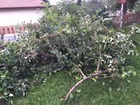 BRANCHES AND JUNK REMOVAL  CALL 780 908 7090