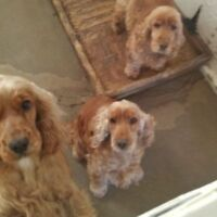 Pet Sitter Wanted - Easy work, fair pay, fun with animals!