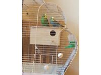 Two lovely Budgies House bird/Cage Used for £60!