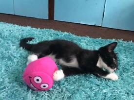 Kitten 10 weeks old ready to join new home