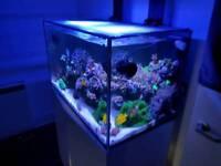 Various corals for sale reef aquarium