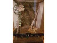 Full crested gecko set up