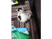 3 Loverly Kittens