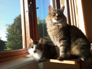 2 cats need a good home