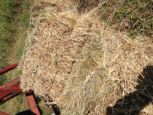 Square Brome and orchard grass square bales sisal twine . $4.50