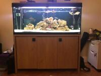 Fluval Roma 240 Full Aquarium set up