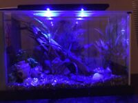 Beautiful fish tank with all the trimmings lights assessorys & more