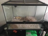 Leopard gecko with tank and heat mat