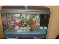 110ltr fish tank with unit