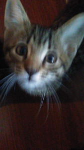 Kittens together  40$
