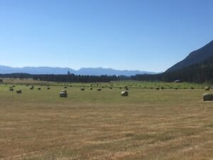 Premium Hay for Sale, round bales and small squares
