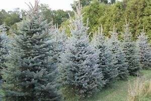 Landscaping trees for sale