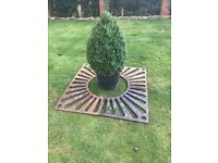 Garden Cast Iron Tree/Plant surrounded