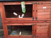 4 guinea pigs and hutch