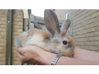 Small cute rabbits to sale