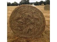 Hay Large Bails Only £15 Each