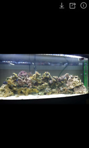 72 gallon bow front