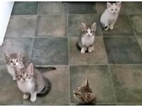 5 beautiful kittens for sale.
