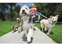 Dog Walking Service £10 per hour £5 per hour for second dog & dog sitting service.