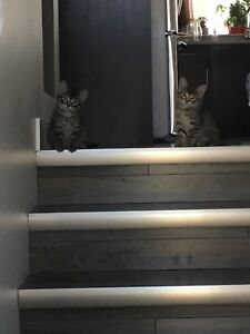 Kittens ready for homes