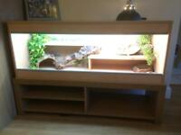 2 x Bearded Dragon and 2 x Vivarium