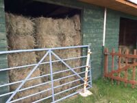 Hay - small square bales