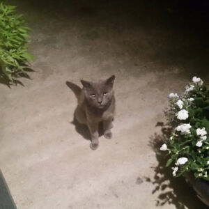 Stray Cat Needs a Home-Free