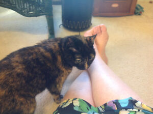 Older cat looking for a home